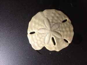 Mitch found this sand dollar during our outing