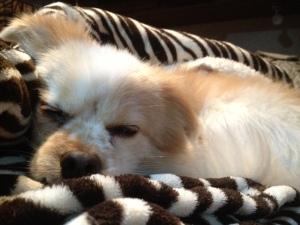 Milo getting his cuttie rest