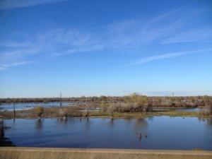 View from interstate in Louisiana