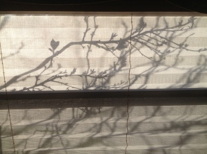 sunshine and shadows, the beauty of everyday things are so awesome