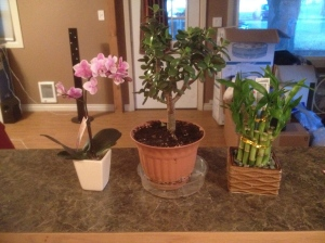 got some beautiful plants for the house already