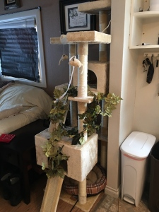 We got her a tree house thinking that would be all she needed