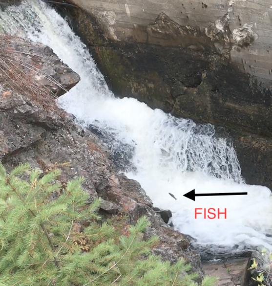 jumping fish at Torrelle Falls